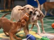 Why You Should Watch the Puppy Bowl