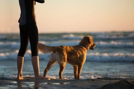 a landlord\u0027s guide to pet friendly rentals pros and cons uloopdog, beach, ocean, sky, person